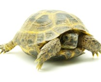 Be the Turtle